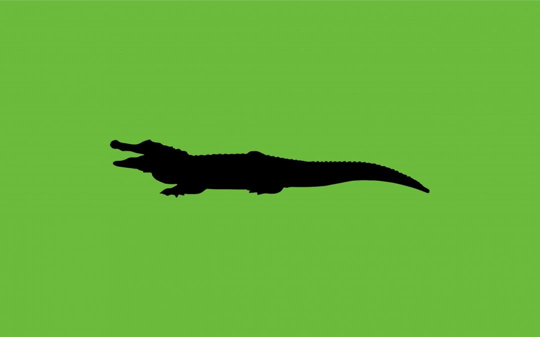 Thailand Aims to Stop Crocodile Escapes